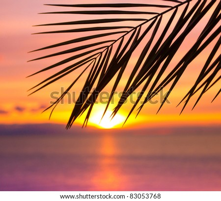 Branch Sunset Bliss - stock photo