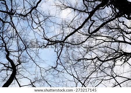 branch tree in garden for design background.