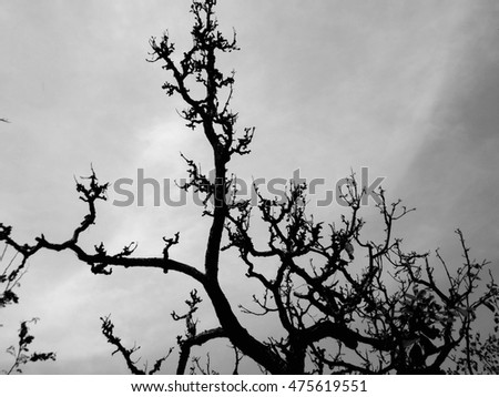 branch tree sky nature background