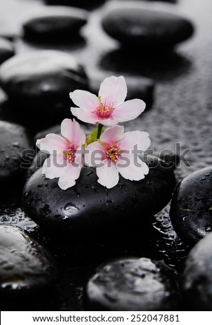 branch tropical flower with therapy stones - stock photo