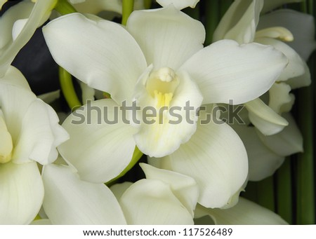 Branch white orchid and and palm leaf background