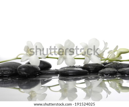 Branch white orchid and black stones