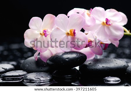 Branch white orchid with therapy stones  - stock photo