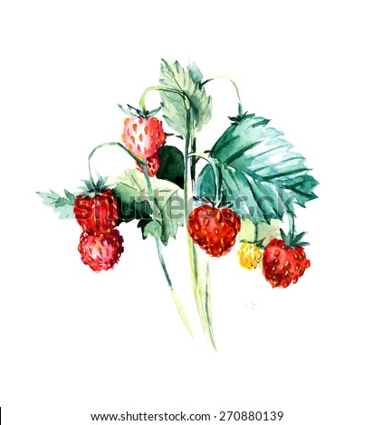 Branch wild strawberry. Forest miniatures. Watercolor hand drawn illustration - stock photo
