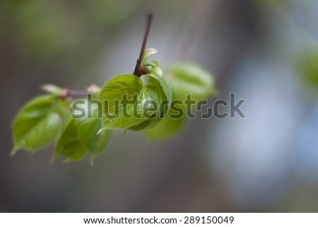 Branch with a bright green leafs. Springtime - stock photo