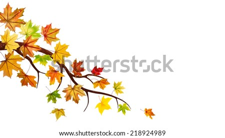 Branch with autumn maple leaves on white.