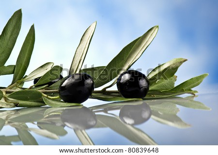 branch with black olives on the sky background