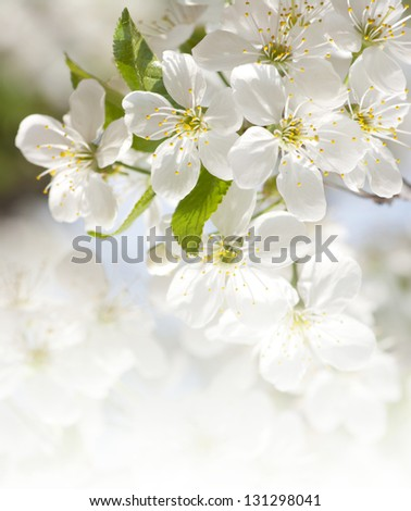 Branch with blossoms - stock photo