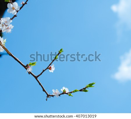 Branch with buds of apricot flowers against the background of a blue sky, with copy space on the right for your text - stock photo