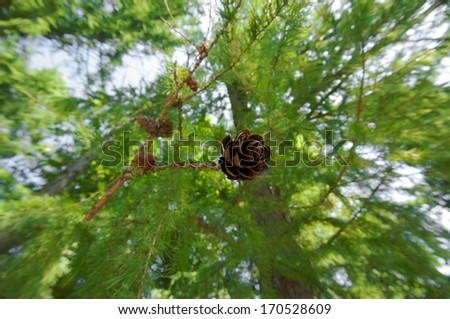 Branch with cone in fisheye view on a forest trees background - stock photo