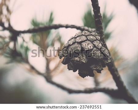Branch with cones. Larix leptolepis - retro, vintage style look - stock photo
