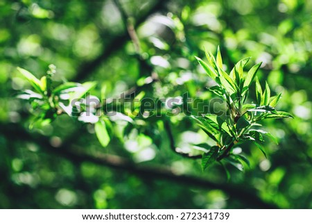 Branch with fresh green leaves over blurred green leaves background, spring. - stock photo