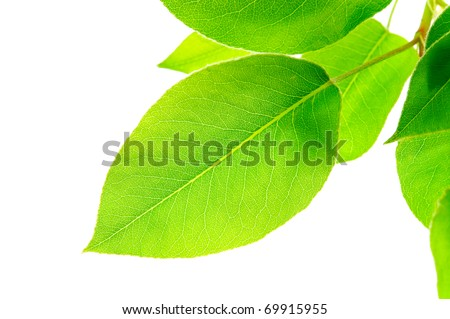 Branch with green leaves - stock photo