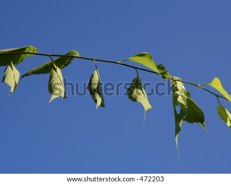branch with green leaves against blue sky - stock photo