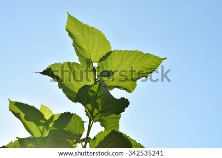 branch with green leaves against the sky  - stock photo