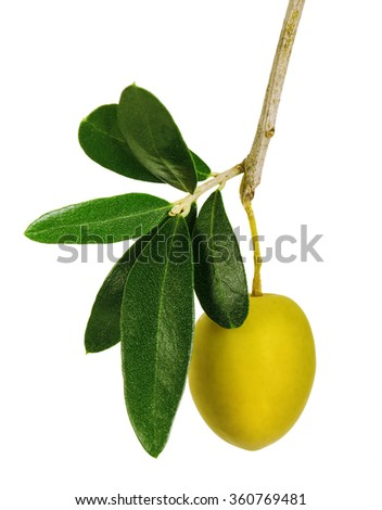 Branch with green olives isolated on a white background - stock photo