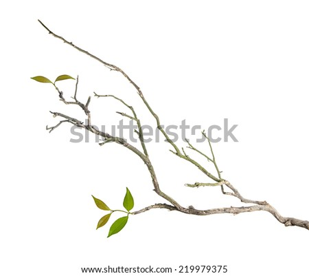 Branch with leaves - stock photo