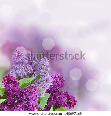 Branch with lilac flowers  with defocused coppy space background - stock photo