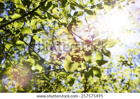 Branch with new green leaves against a bright sun. - stock photo