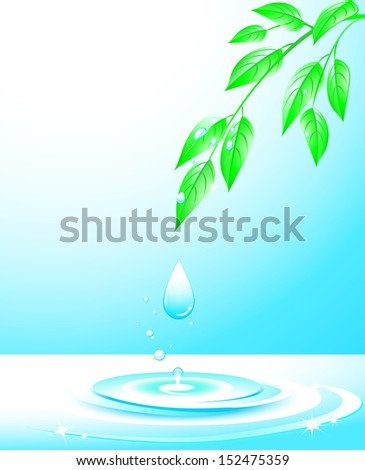 branch with sprigs and green leaves, falling water drop and splash  - stock photo