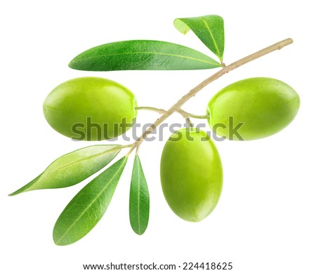 Branch with three green olives isolated on white, with clipping path - stock photo