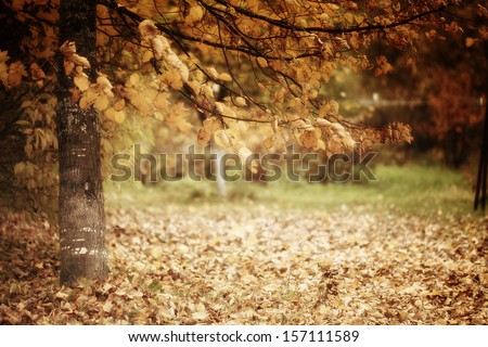 branch with yellow leaves - stock photo