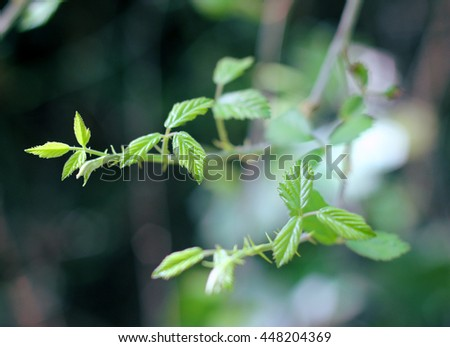 Branch with young delicate green leaves, lush and fresh - stock photo