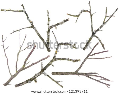 Branches and twigs are cut off from an old  apple and cherries tree set. On branches the moss and a lichen grows. Isolated - stock photo