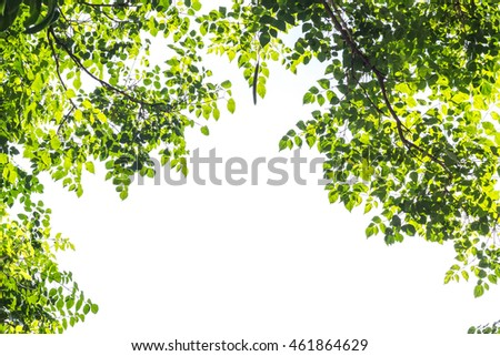 branches,green leaf isolated on white background