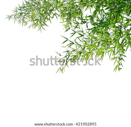 Branches of a bamboo isolated on white background. Selective focus - stock photo