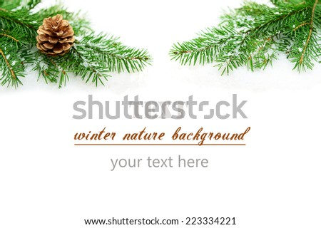 branches of a Christmas tree in the snow on a white background