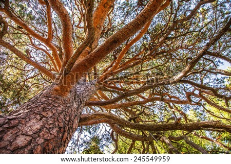 branches of a tree against blue sky close up - stock photo