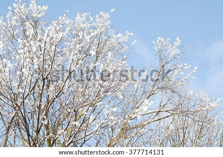Branches of a tree in the snow on a background of blue sky - stock photo