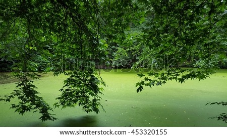 Branches of a tree over a green lake