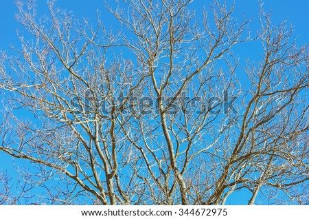 Branches of Bare Tree in the Winter - stock photo