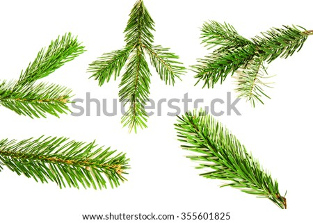 Branches of fir tree isolated on white background - stock photo