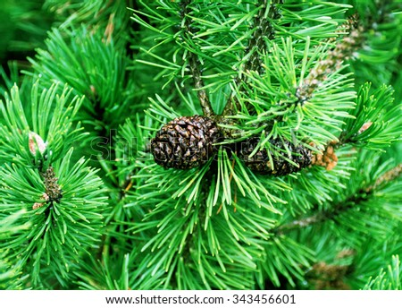 branches of green fir tree - stock photo