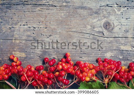 Branches of red berries of a Guelder rose or Viburnum shrub on  a wooden background. Bright autumn background with berries viburnum - stock photo