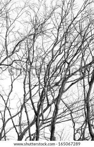 Branches of the background black and white