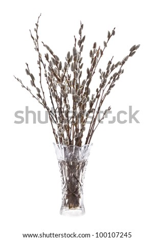 Branches of the pussy willow with flowering bud in vase with water isolated on white background - stock photo