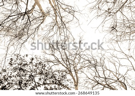 branches of the tree. - stock photo