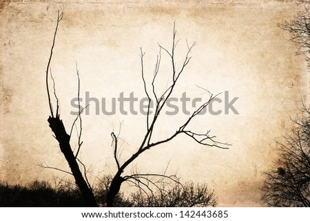 Branches of the tree against golden background, sunset, artwork in painting style