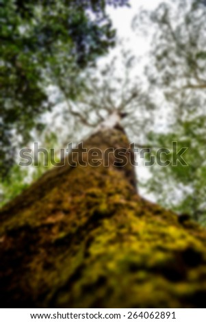 Branches of the tree in blur style - stock photo