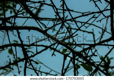 Branches of tree - stock photo