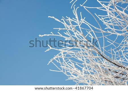 Branches of tree with frost in winter - stock photo