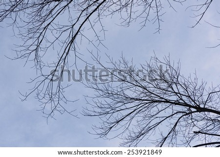 Branches of trees above the head create a airy background against blue sky - stock photo