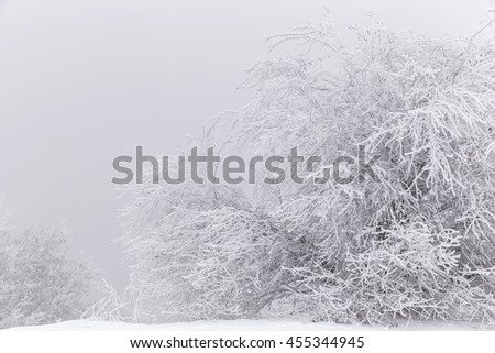 Branches of trees covered with snow and ice