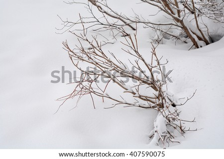 Branches of trees in hoarfrost on background snow. - stock photo