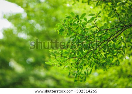 Branches, sunlight in the morning. - stock photo