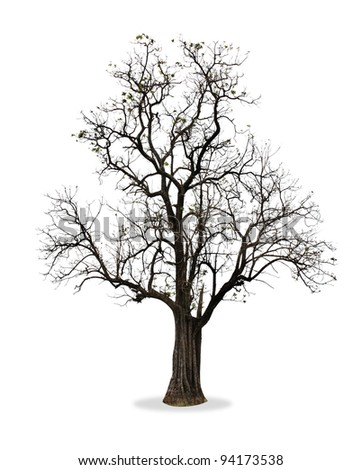 branches tree isolated on white - stock photo